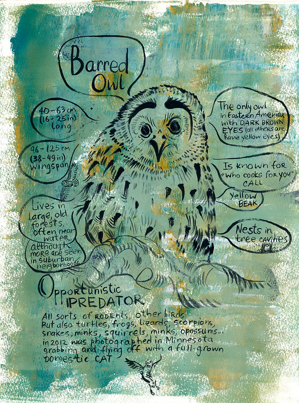 Owls_02_Barred
