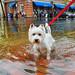 Floods are Fun by Rob J Dart
