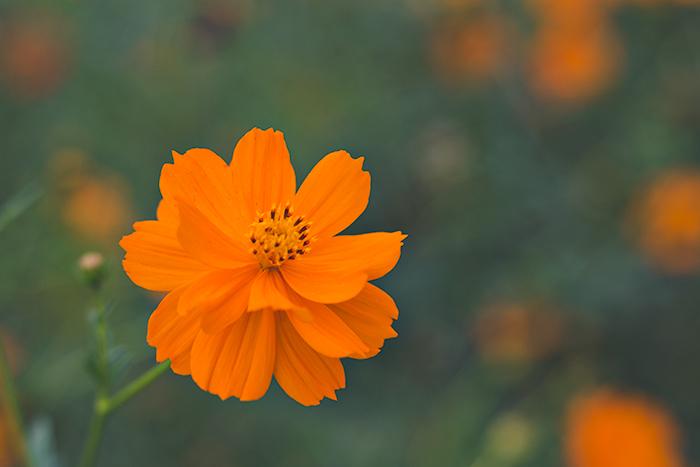 Hama-rikyu-Gardens-5