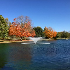 Neat-o colorful scenery 🍂🌳 #park #fall #october
