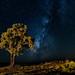 The Milky Way by C McCann