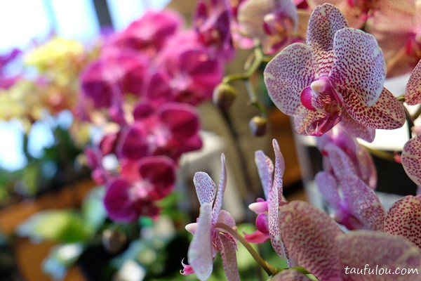 ORchid Culture (12)