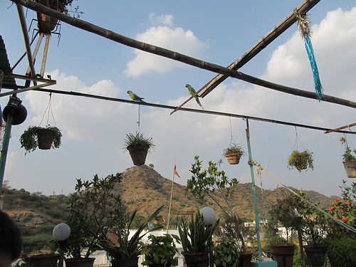 Pushkar: deux nouveaux invités sur le toit de notre guesthouse