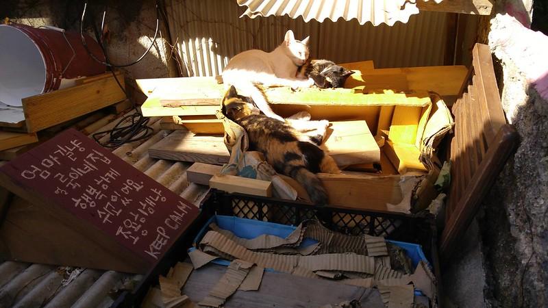 E's Seoul 04_Stray cats@北村韓屋村