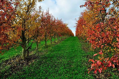 En automne les arbres pourpres!