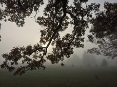 Morning Fog. iPhone