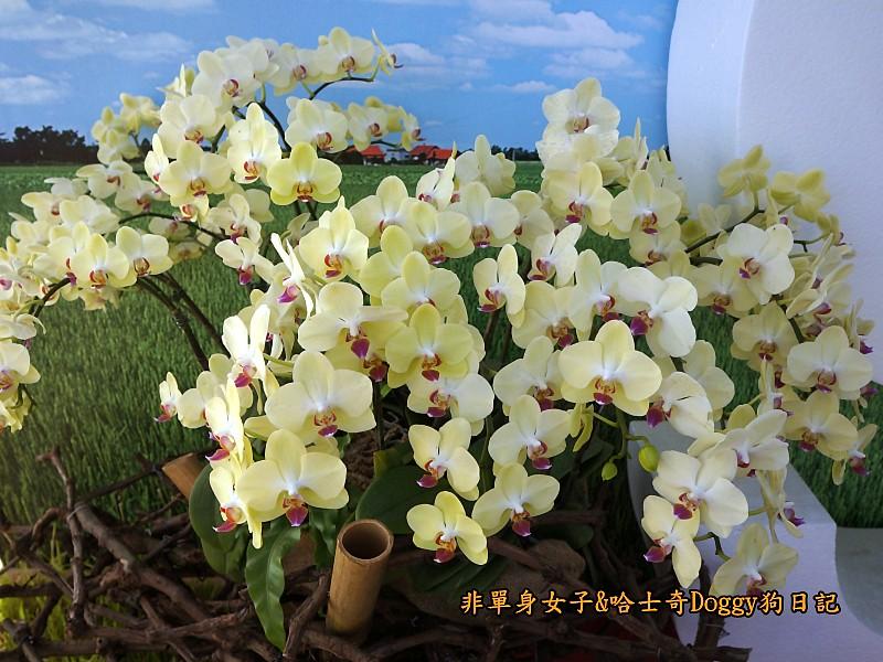 新社花海高美濕地金榜麵館28