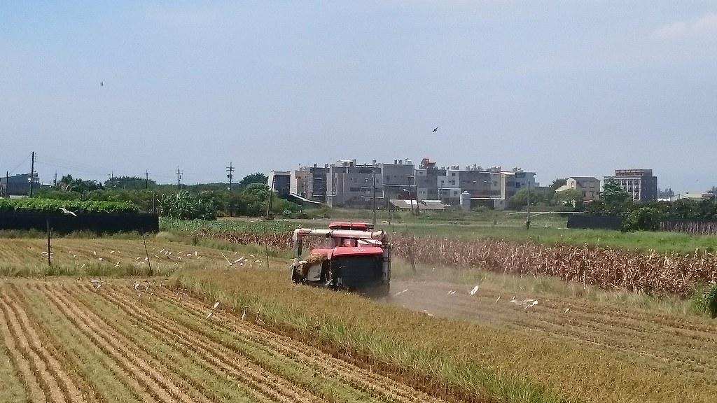 高雄市路竹區采芳米 (104)