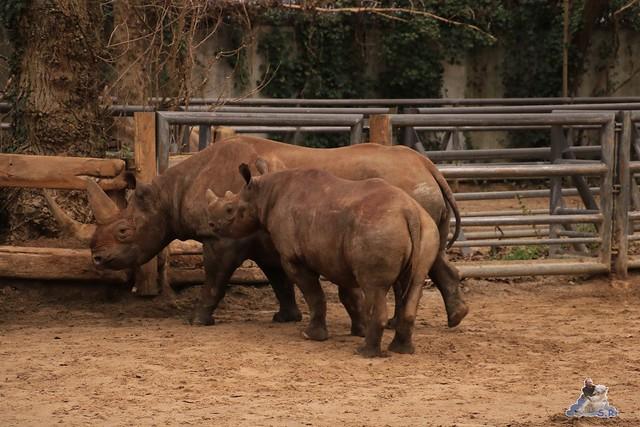Zoo Berlin 06.12.2015    078