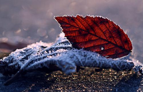morning winter ice sunrise bayern bavaria frost eis sonnenaufgang morgen raureif niederbayern whitefrost lowerbavaria