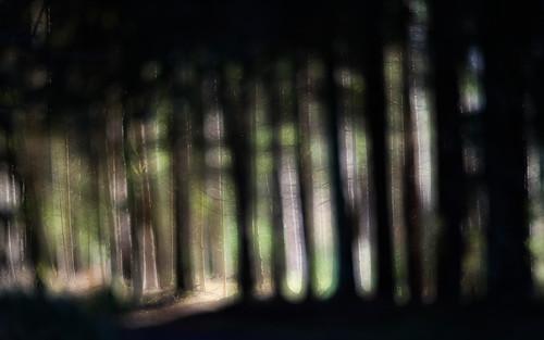 Glowing_Wood_90703