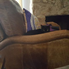 #catsareawesome #blackcatsarethebest when you suddenly feel someone is starring at you