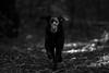 In the dark, dark woods... by Marcus Legg