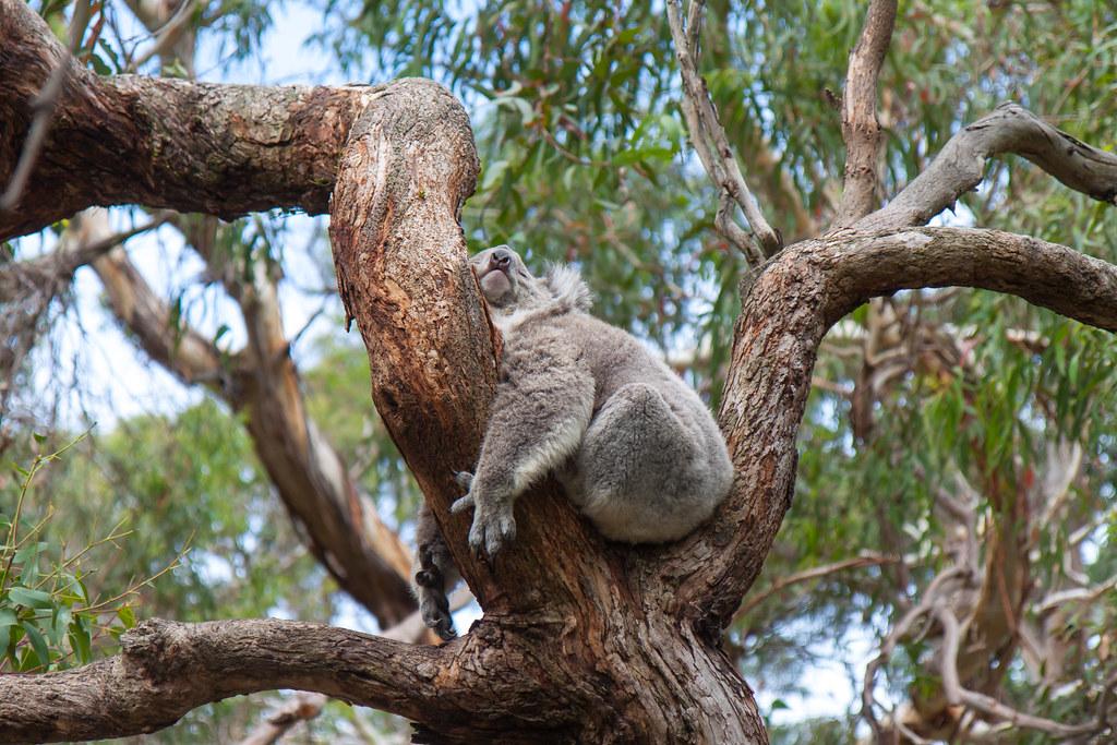 Australia, Phillip Island