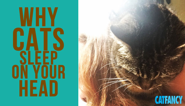 why-cats-sleep-on-heads