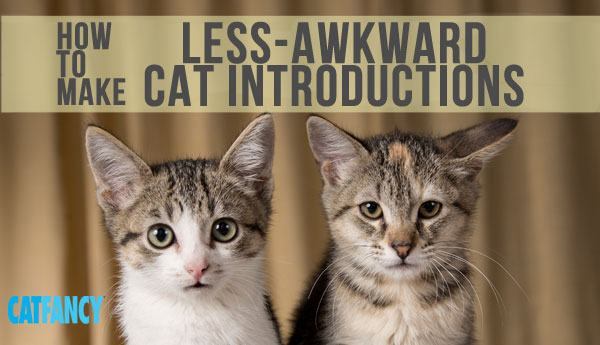 less-awkward-cat-introductions