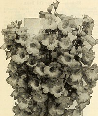 """Image from page 26 of """"Dreer's wholesale price list for florists"""" (1935)"""