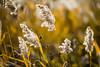 Flowers of Autumn by Alpav72