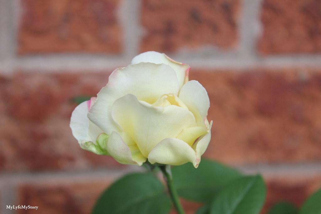 My Garden 2015 (10)