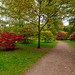 Westonbirt Arboretum, Gloucestershire by Iso Max Photography
