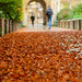Autumn in Cambridge 2/3 by Sir Cam