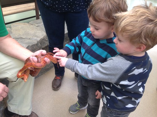 At the Brookfield Zoo: Touching a Snake