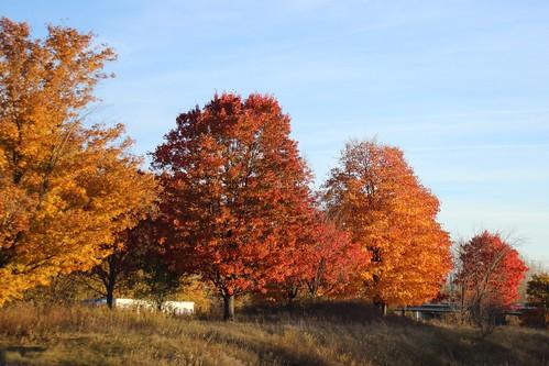IMG_6533_Fall_Foliage
