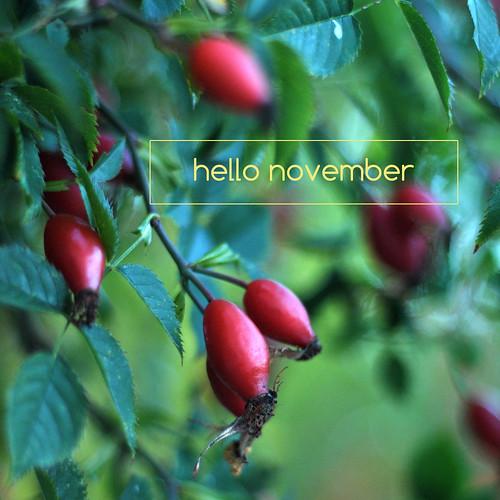 hello_november2015