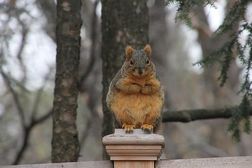 188/365/2744 (December 16, 2015) - Squirrels in Ann Arbor at the University of Michigan (December 15 & 16, 2015)