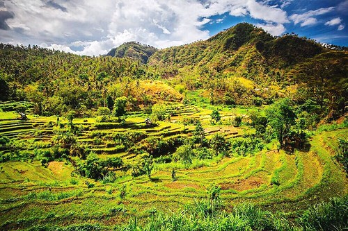 bali nature beautiful indonesia landscape outdoors landscapes bio adventure explore exotic tropical traveling ricefield homegrown ricepaddy balinese travelphotography landscapephotography tropicalclimate landscapecollection eyeemindonesia theadventurehandbook