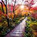 momiji '15 - autumn foliage #12 (Hokyo-in temple, Kyoto) by Marser