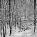 Snowy Trail, Highbanks Metropark by mat4226