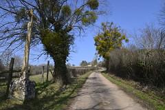 Pellerey - Photo of Lamargelle
