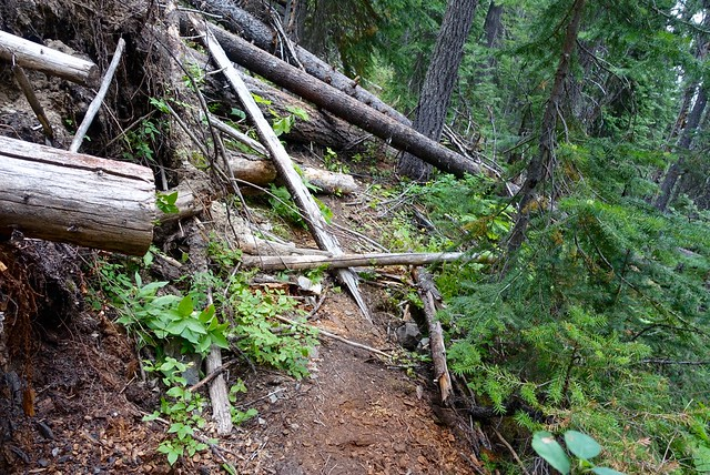 Blowdowns on the PCT in Manning Park