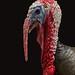 Bronze Turkey by Emanuel Papamanolis