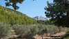 Late summer on the slopes of the Sainte Victoire, Aix-en-Provence