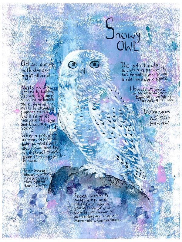 Owls_06_Snowy
