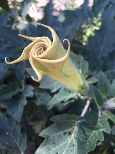 Flower in Moab, UT