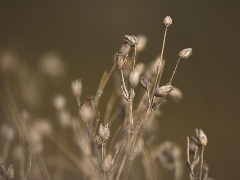 luonto1