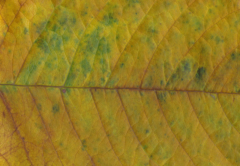 CreativeCommons - Autumn leaves - 2015 Series 1 - 07 by #TexturePalace