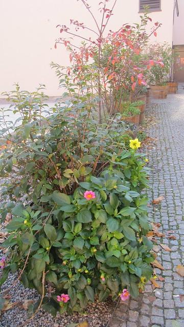 Berliner Herbst