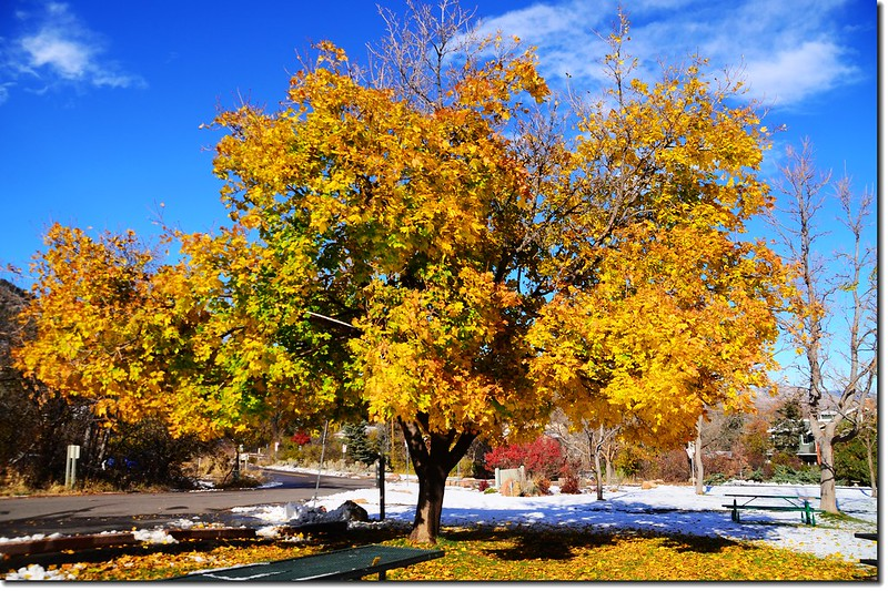 Noway maple in Fall, Chautauqua, Boulder 5
