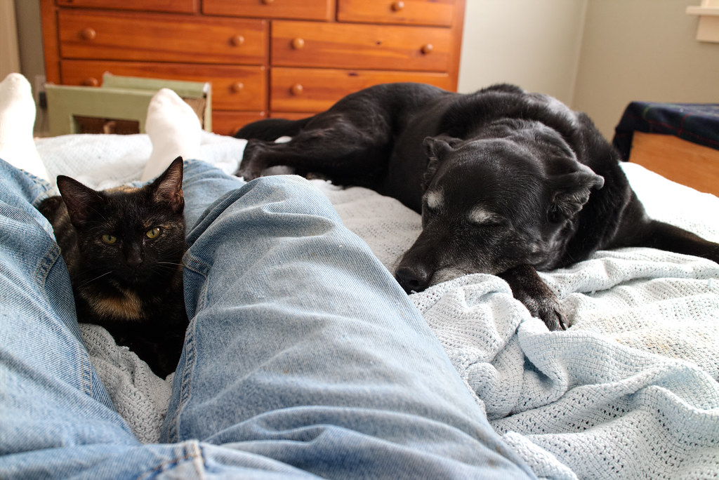 Our dog Ellie and our newly adopted cat Trixie sleep beside and on me in our guest bedroom