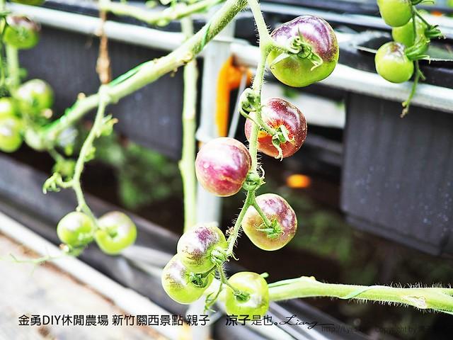 金勇DIY休閒農場 新竹關西景點 親子 75