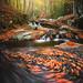 autumn swirls by d_matra