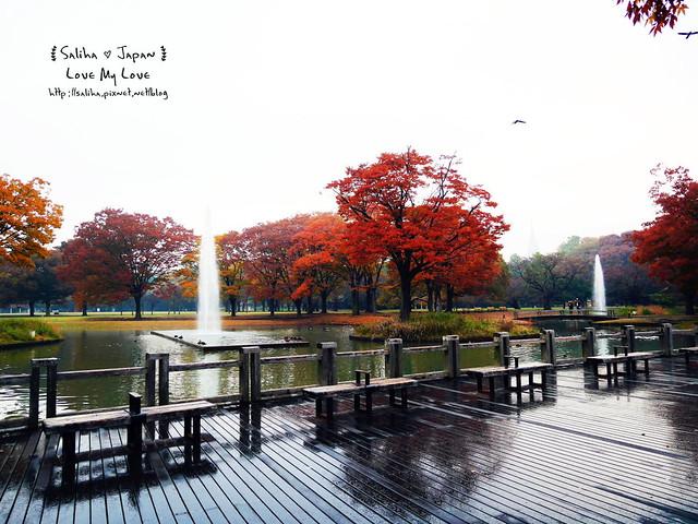 日本東京景點澀谷區代代木公園賞楓葉 (18)