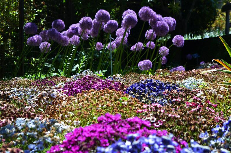 Flowers, Villa Taranto, Verbenia, Lake Maggiore, Italy