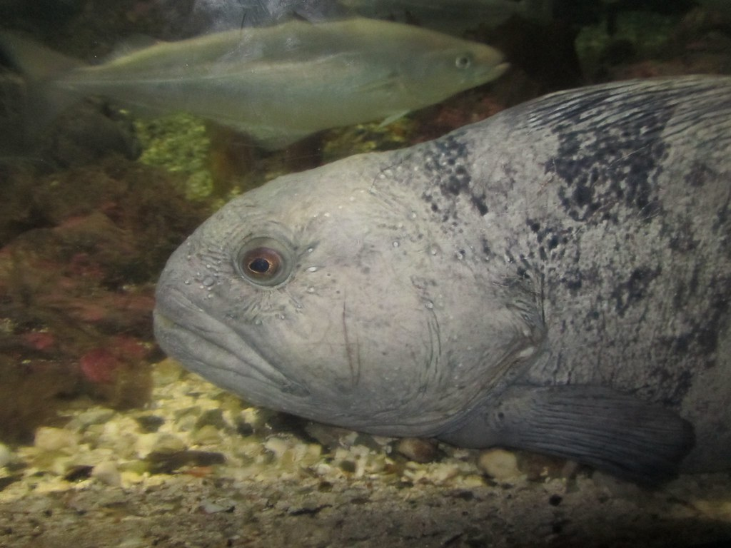 Un pez raro, raro