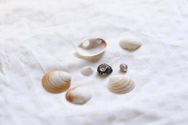 shell 2015-09-22 1013