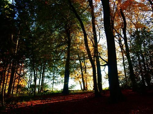 More autumn 1